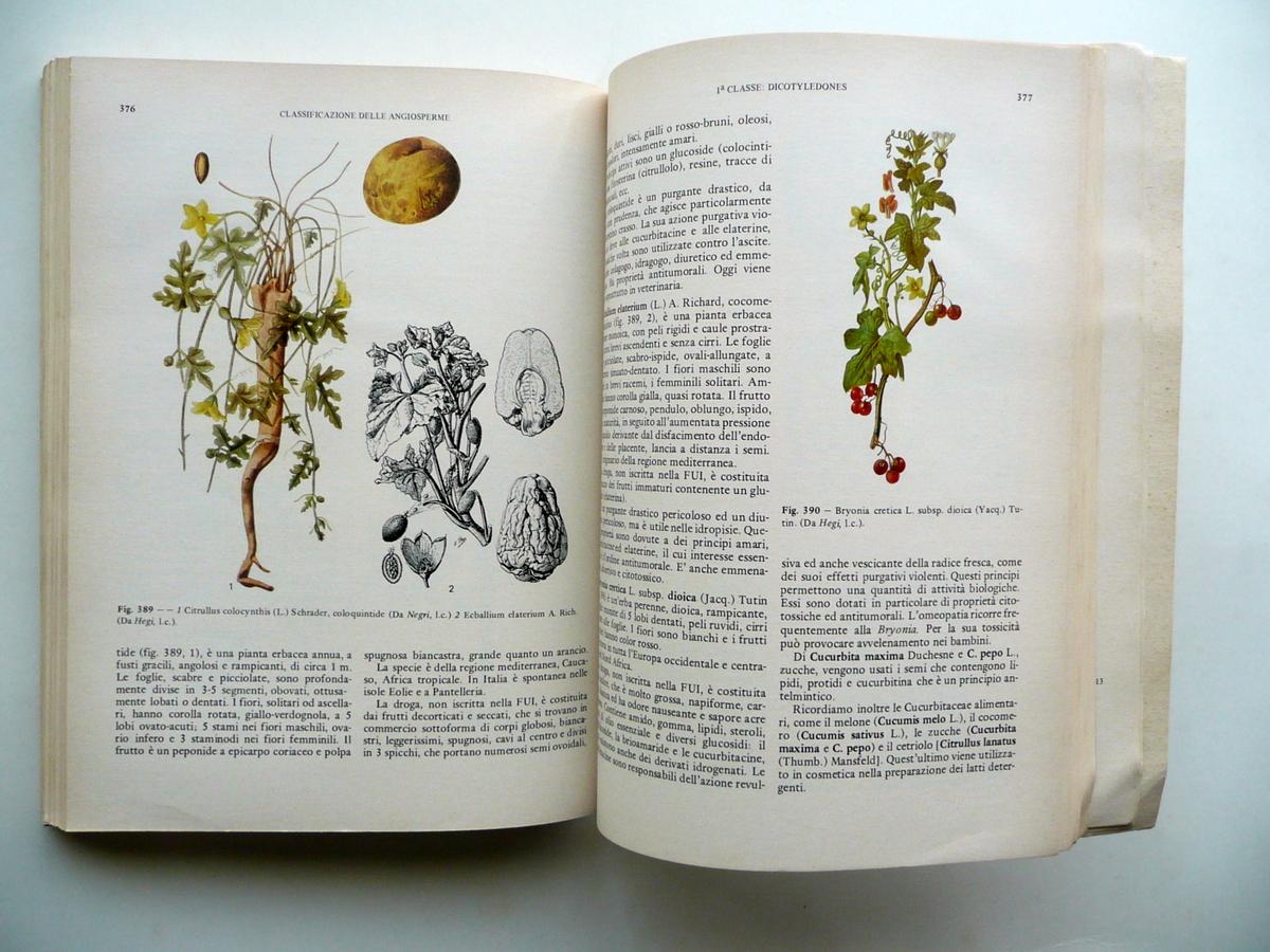 Farmacia Chimica  Manuale Di Botanica Farmaceutica Elena Maugini Vi Edizione Piccin Padova 1983